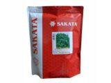 Semente de Salsa Chácara 500g